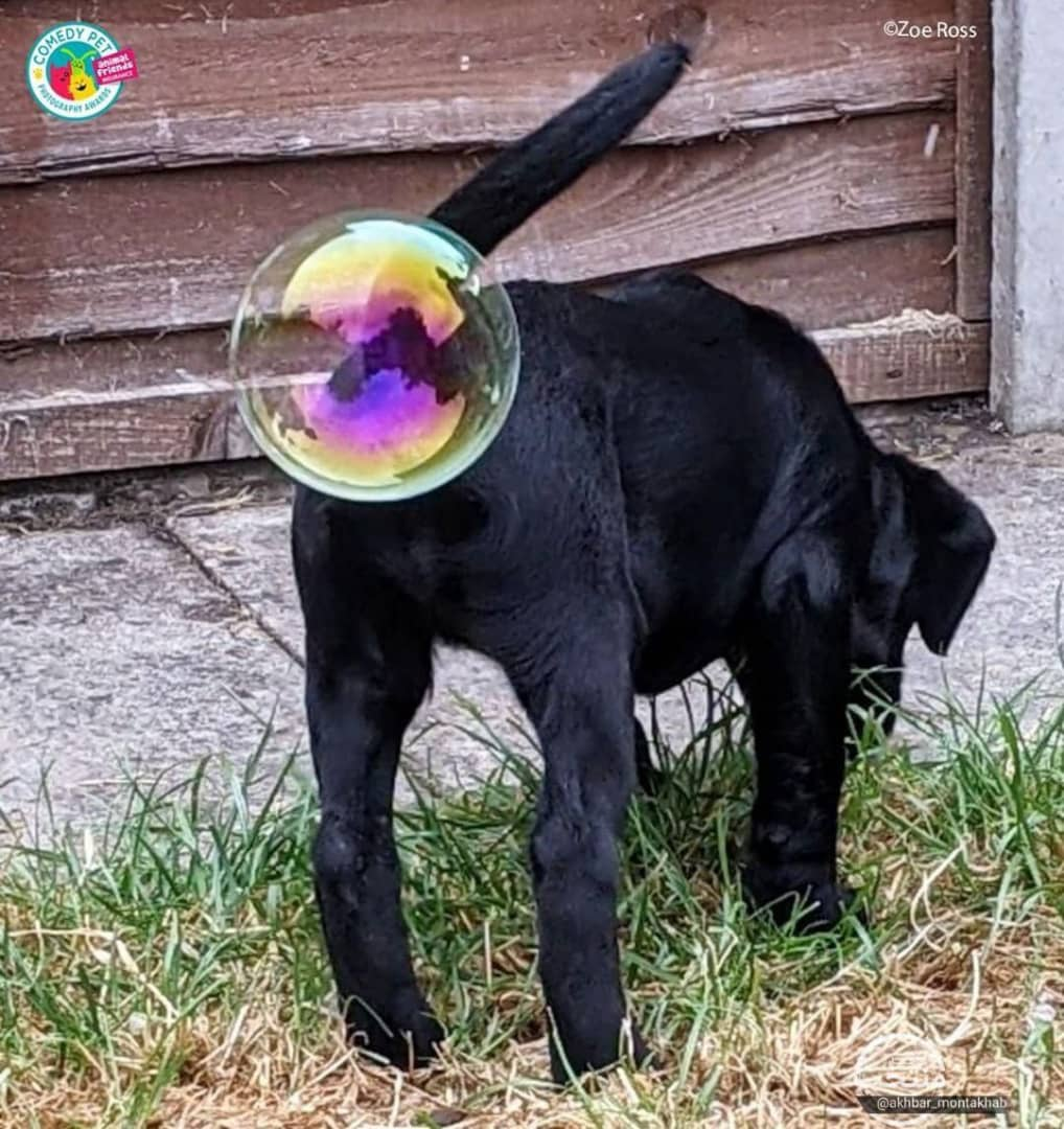 دم سگ