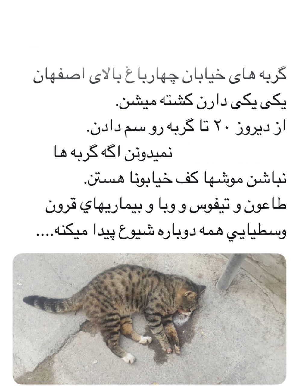 چه+ارگانی+در+حال+کشتار+گربه_ها+در+اصفهان+است