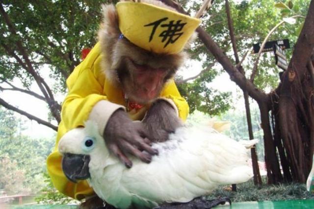 دوستی بین حیوانات