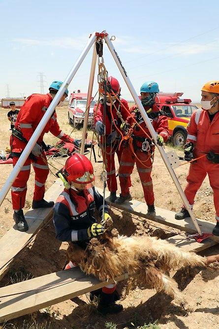 نجات گوسفند سقوط کرده در چاه توسط آتش نشانان در مشهد