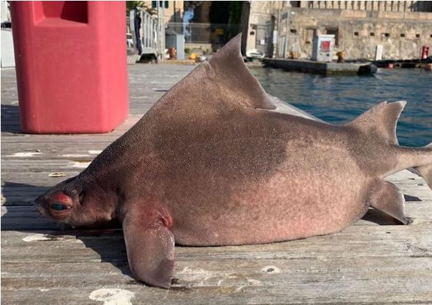 ماهی عجیب در ایتالیا