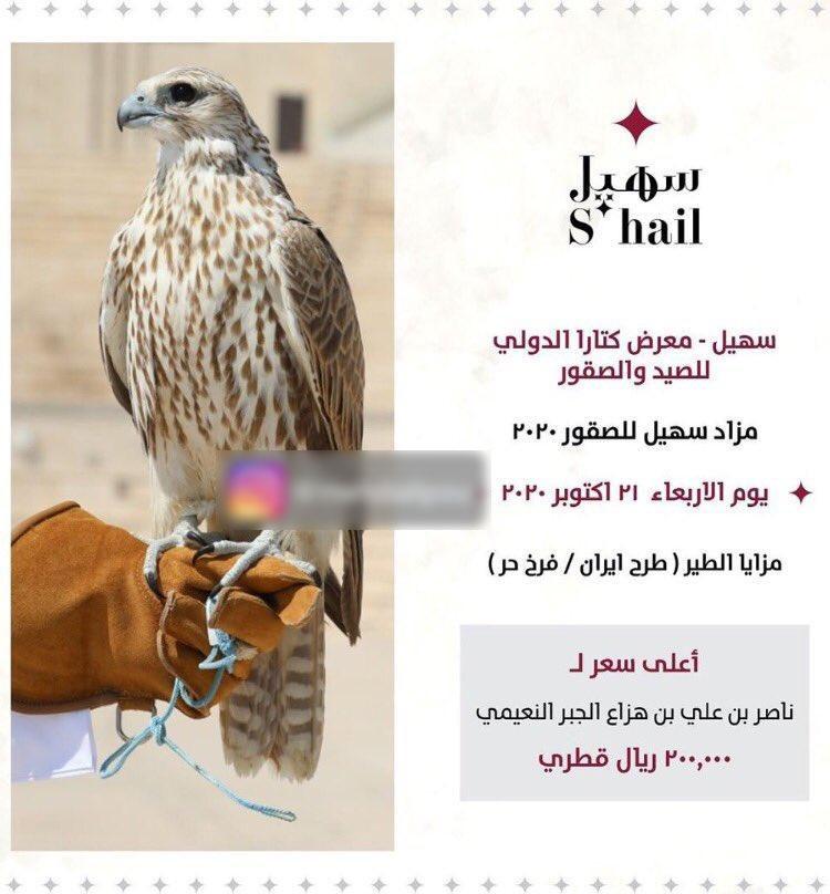 مزایده پرنده شکاری