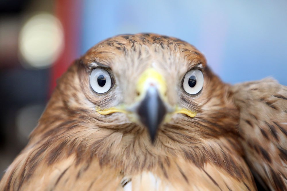 عقاب در خانه