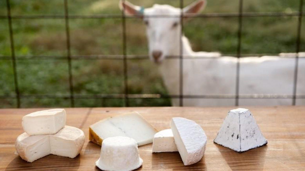 پنیر بز
