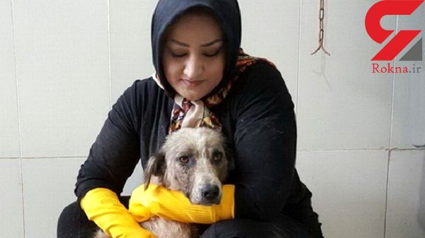 حمله شبانه به ژیلا پورایرانی در تبریز ! / سگی را با داغ اتو کشتند!+عکس