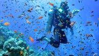 دلیل از بین رفتن مرجان های جنوب چیست؟