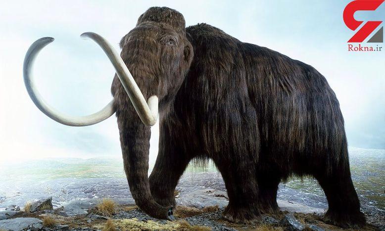 کشف دندان ماموت های دو میلیون سال پیش در اردبیل