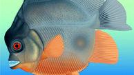 ماهی گوشتخواری که قدرت تخریب حیرت انگیزی دارد + فیلم