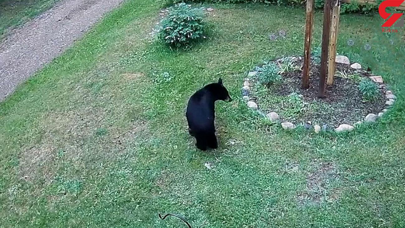 وحشت خرس از یک سگ خانگی کوچک + فیلم