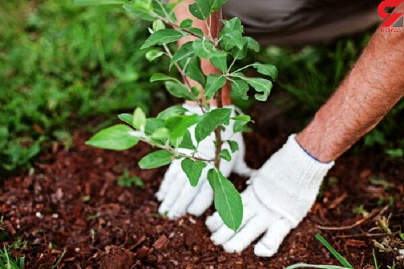 توزیع نهال با کیفیت درختان میوه