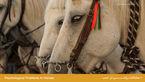 مشکلات روانی در اسب ها چیست؟