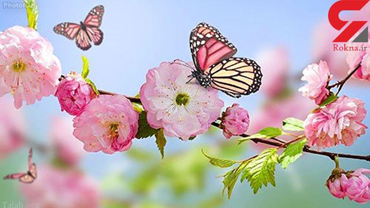 سفر عاشقانه من و پروانه / سفری بهاری و خیال انگیز در روزهای کرونایی