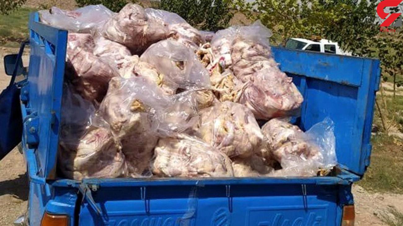 کشف و ضبط بیش از یک تن گوشت مرغ فاسد از یک مرکز بسته بندی در نیشابور