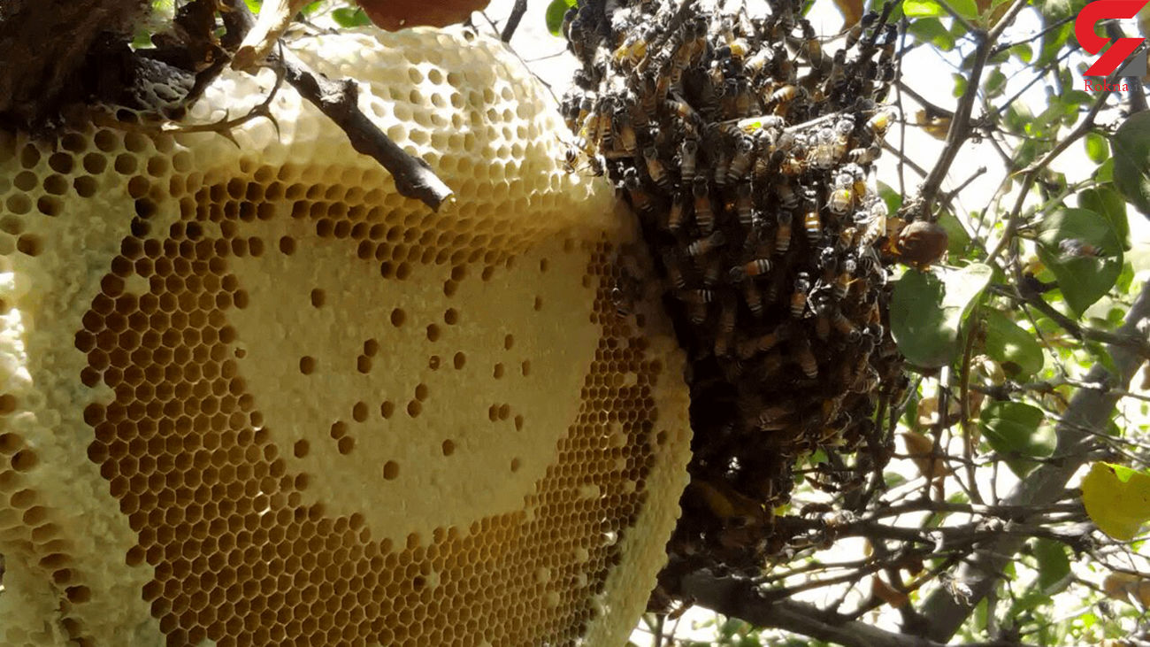 چطور بهترین عسل طبیعی را بخریم؟