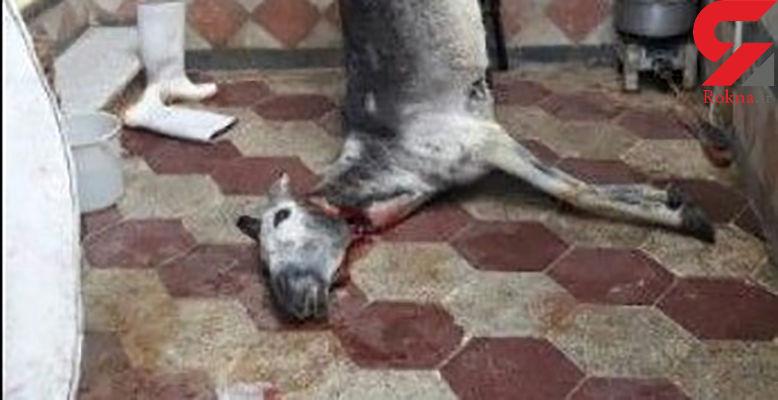 خبر تهوع آور / توزیع گوشت الاغ به جای گوشت برزیلی در گرگان توسط یک کبابی + عکس