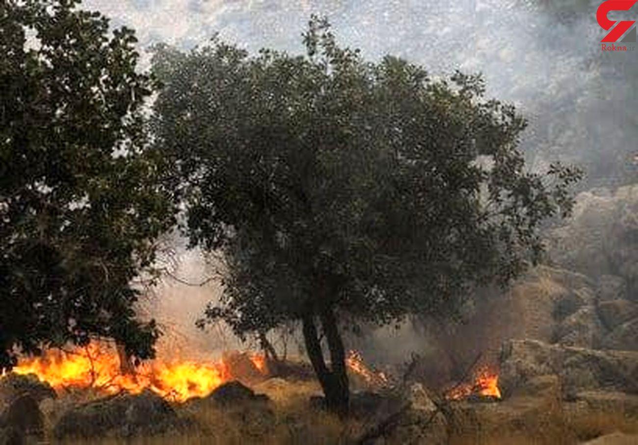 معرفی ۳ عامل آتشسوزی در پارک ملی دز به مراجع قضایی