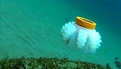 عروس دریایی نگهبان آب دریاها+عکس