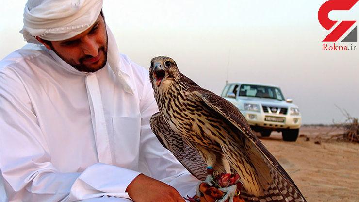تفریحات شیخ های عرب با پرندگان ایرانی +عکس