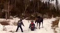 وحشتناک ترین لحظه های حمله حیوانات به انسان + فیلم دیدنی