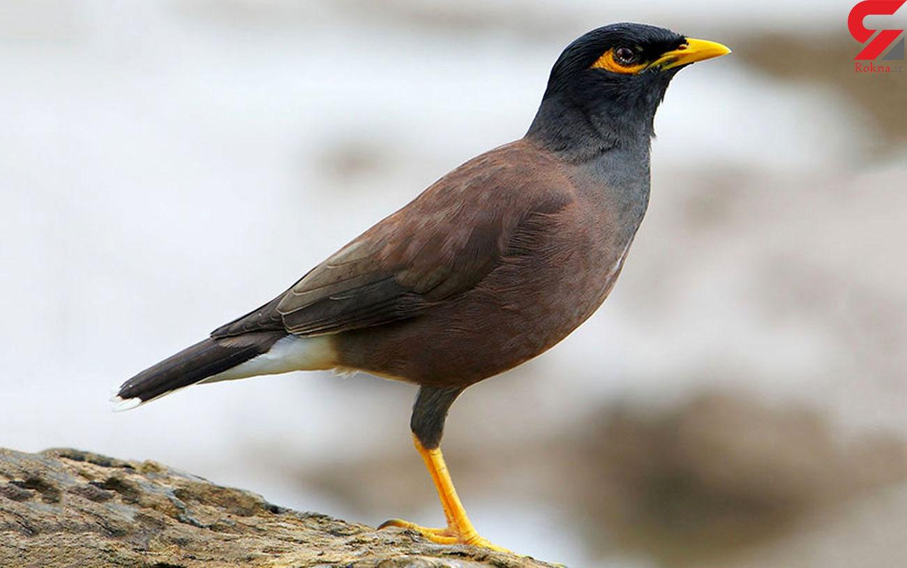 کشف پرنده قاچاق از داخل پراید/ارزش این پرنده ها چند میلیارد است؟