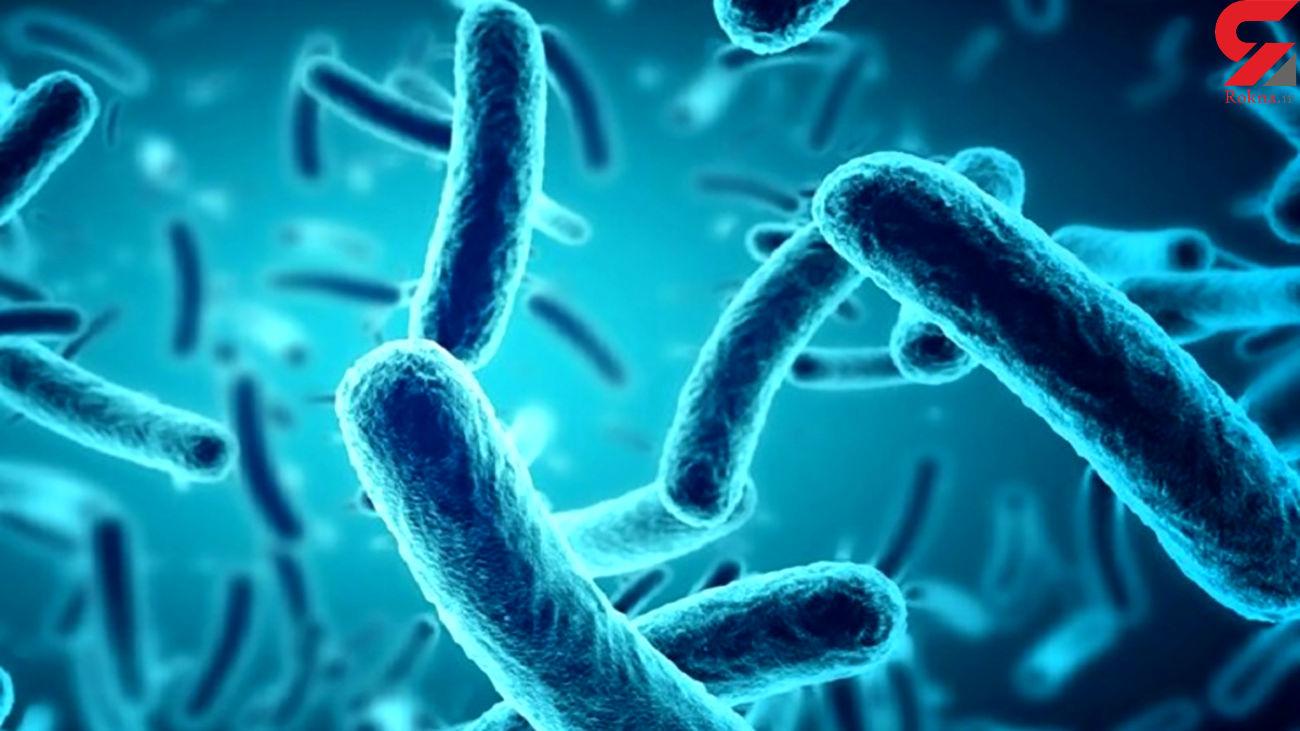 باکتری ها کدام بخش بدن انسان را دوست دارند؟