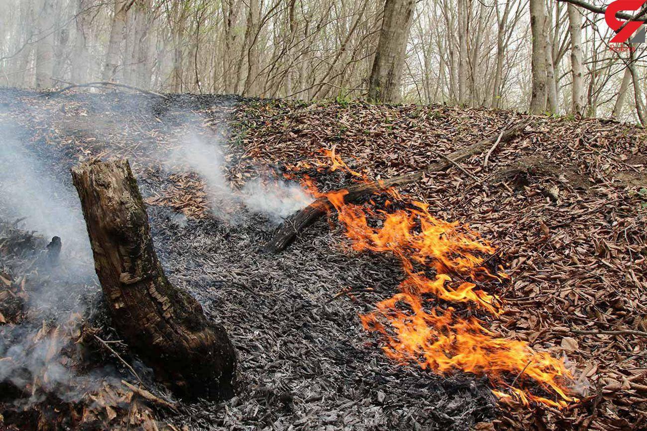 اعتبار ۷۰ میلیاردی برای اطفای حریق در جنگل ها