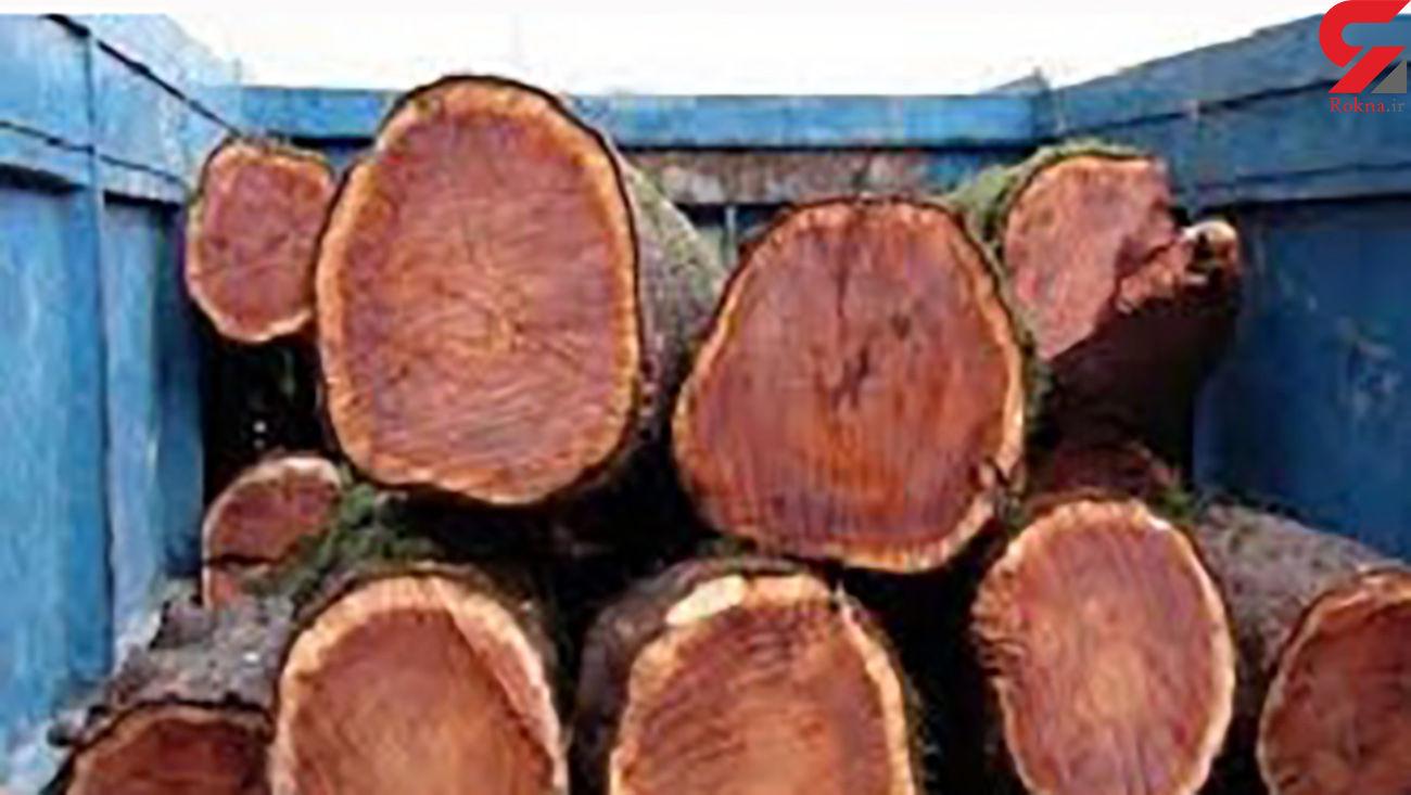 کشف 3 و نیم تن چوب قاچاق در سوادکوه شمالی