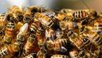زنبورها موضوعات پیچیده را درک می کنند