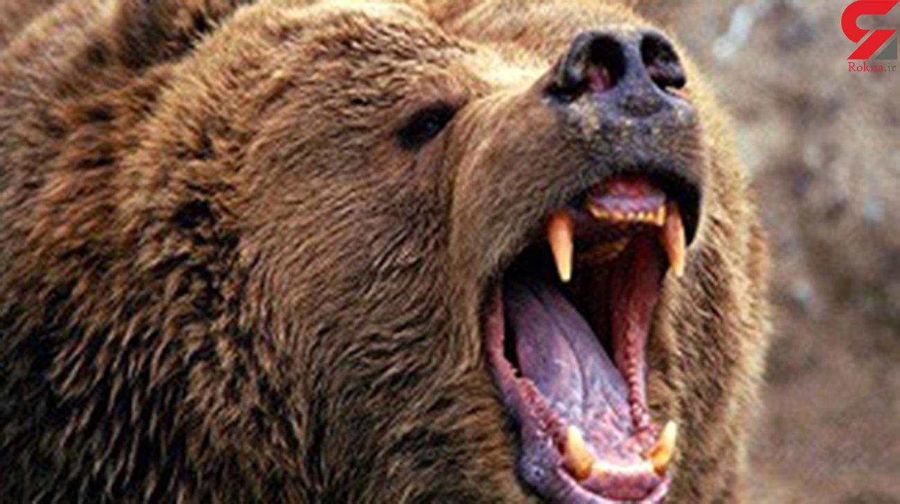 خرس وحشی 2 مرد را در ایذه درید