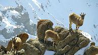 با حیوانات گرفتار در برف و سرما مهربان باشید