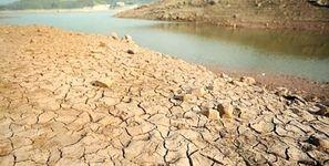 برنج کاری غیرقانونی در لرستان / نابودی مزارع و رودخانه ها در خشکسالی + فیلم