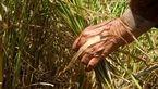 افزایش سن بازنشستگی ستمی که به کشاورزان ایرانی روا شد