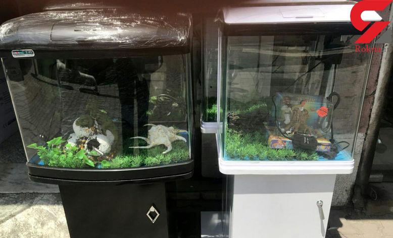 دزد آکواریومها با ماهیها حرف میزد! + عکس متهم در کلانتری نواب