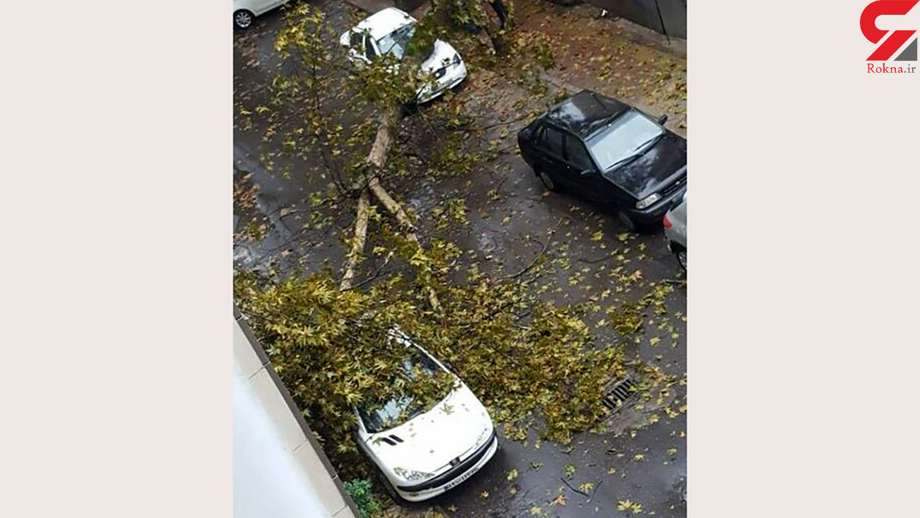 سقوط وحشتناک درخت روی 2 خودرو در رشت + عکس