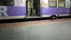 استقبال هر شب سگ از قطار ساعت 23 !+فیلم