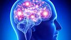 مغز؛ عامل اصلی تولید حرارت