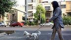 سگ گردانی در تهران ممنوع شد/ مجازات سنگین در انتظار متخلفان