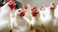 کشف ۲۶ تن مرغ زنده قاچاق در اسلام آبادغرب