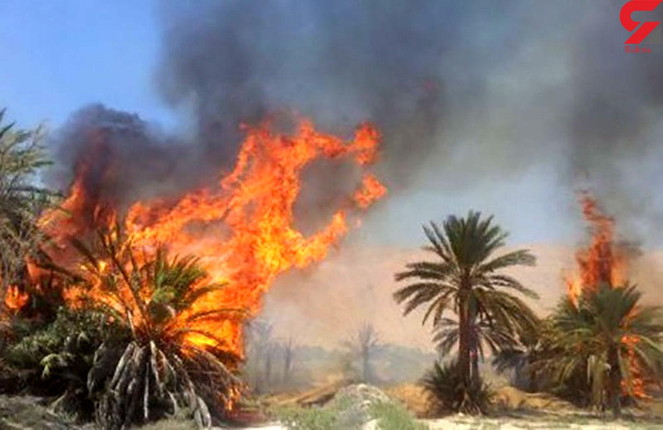 آتش سوزی در نخلستان عسلویه مهار شد