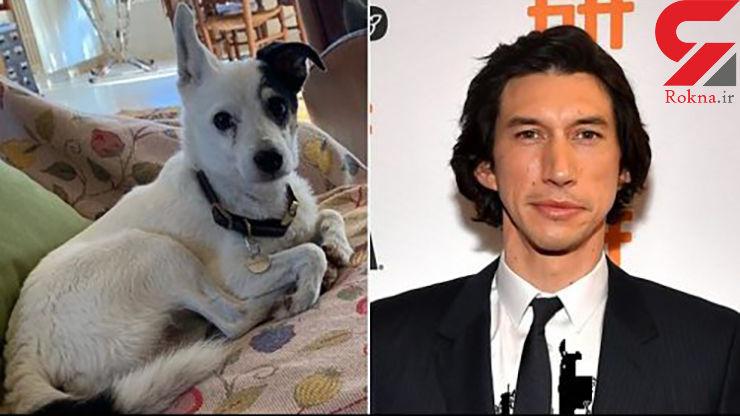 سگ کارگردان مشهور پیدا شد/ حضور احتمالی یابنده در فیلم