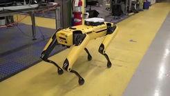 ربات هوشمندی که مثل یک حیوان خانگی رفتار میکند! + فیلم