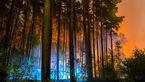 آتش سوزی هولناک در جنگل های برلین + تصاویر