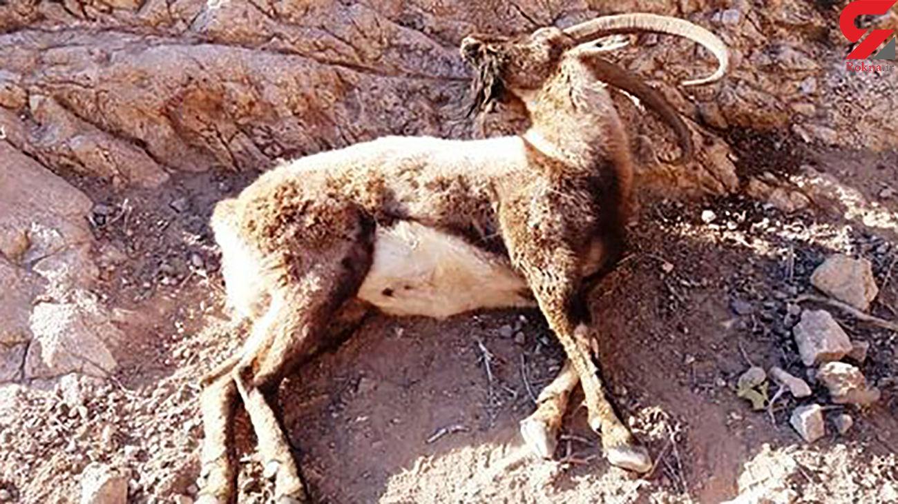 طاعون در اصفهان فاجعه آفرید + جزئیات باور نکردنی