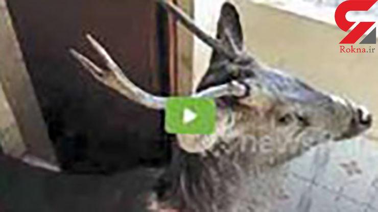 وحشت دانش آموزان یک مدرسه از مشاهده حیوان جنگلی + عکس