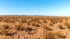 بارش عجیب باران بعد از ۵۰۰ سال/زندگی نابود شده در صحرای شیلی
