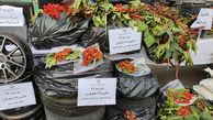 کشف ماده مخدر «داتورا» در طرح پلیس تهران + تصاویر