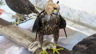 4  بهله پرنده شکاری قاچاق در دیلم کشف شد