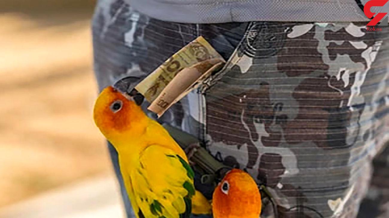 فیلم دزدی پرنده آموزش دیده را ببینید