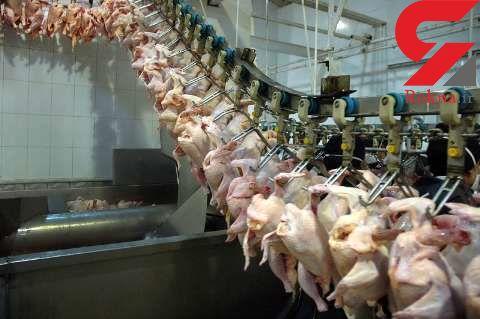 مرغ آماده طبخ 10 هزارو 300 تومان