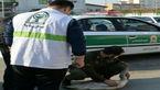 عکس/ نجات قوی آوازخوان توسط پلیس در میدان اصلی بابلسر